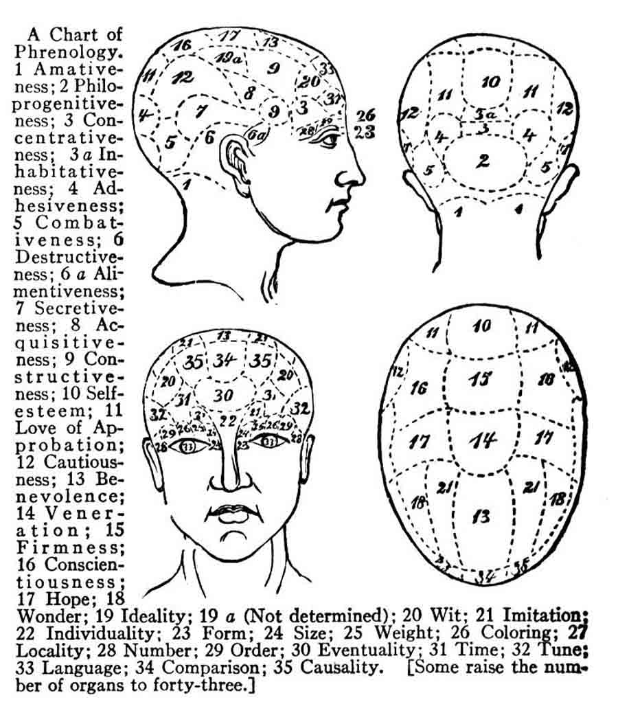 Diagram Of A Head Has Various Areas Labeled