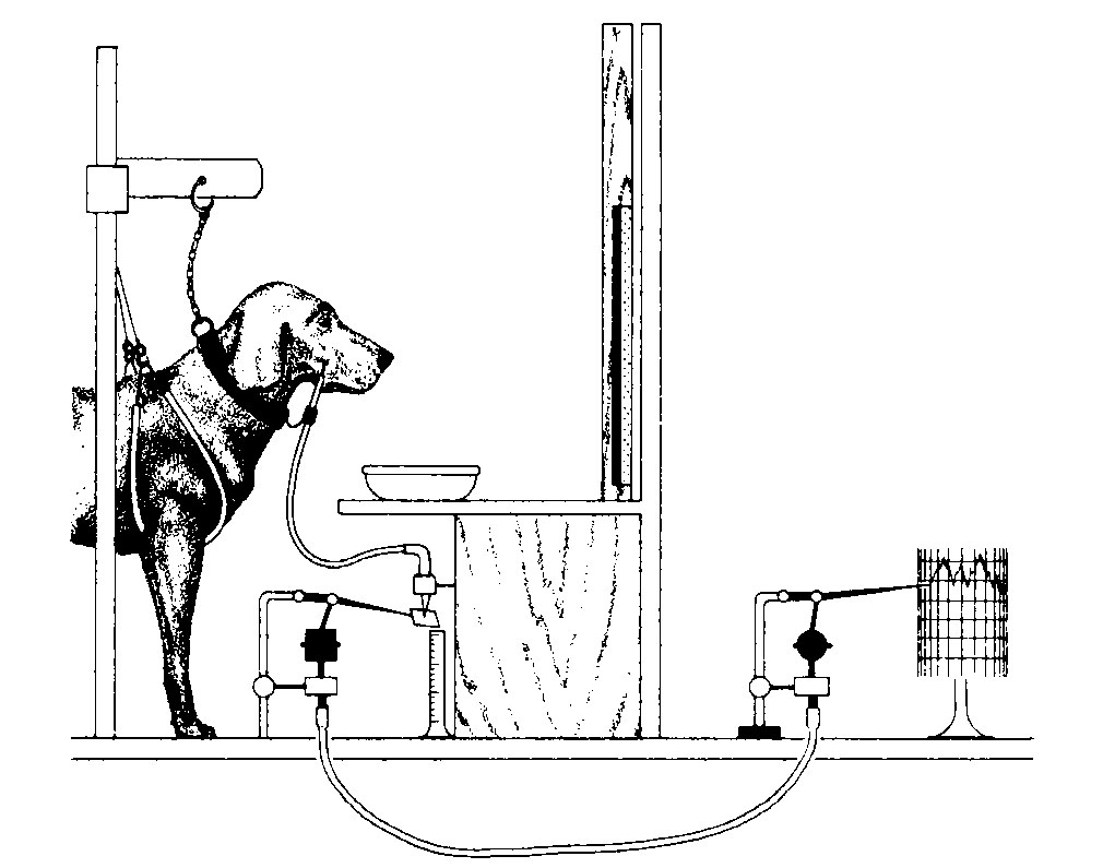 classical conditioning in chapter 05 conditioningdiagram of dog in harness with tube in cheek